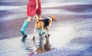 ¿Por qué los médicos deben preocuparse por el maltrato animal?