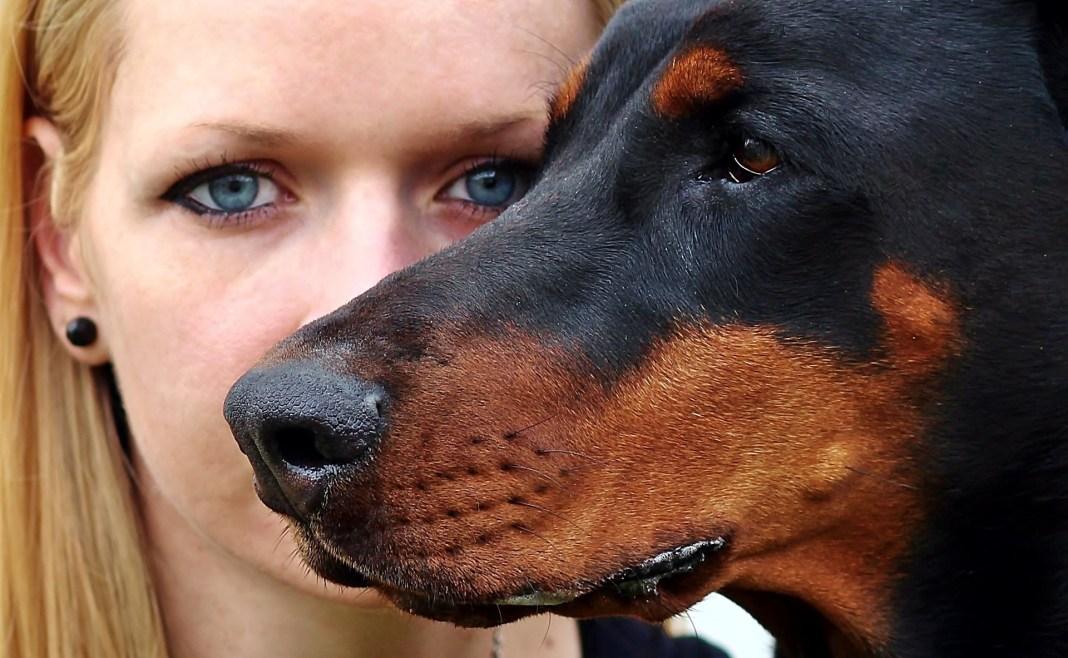Las mascotas, otra herramienta más de la violencia machista