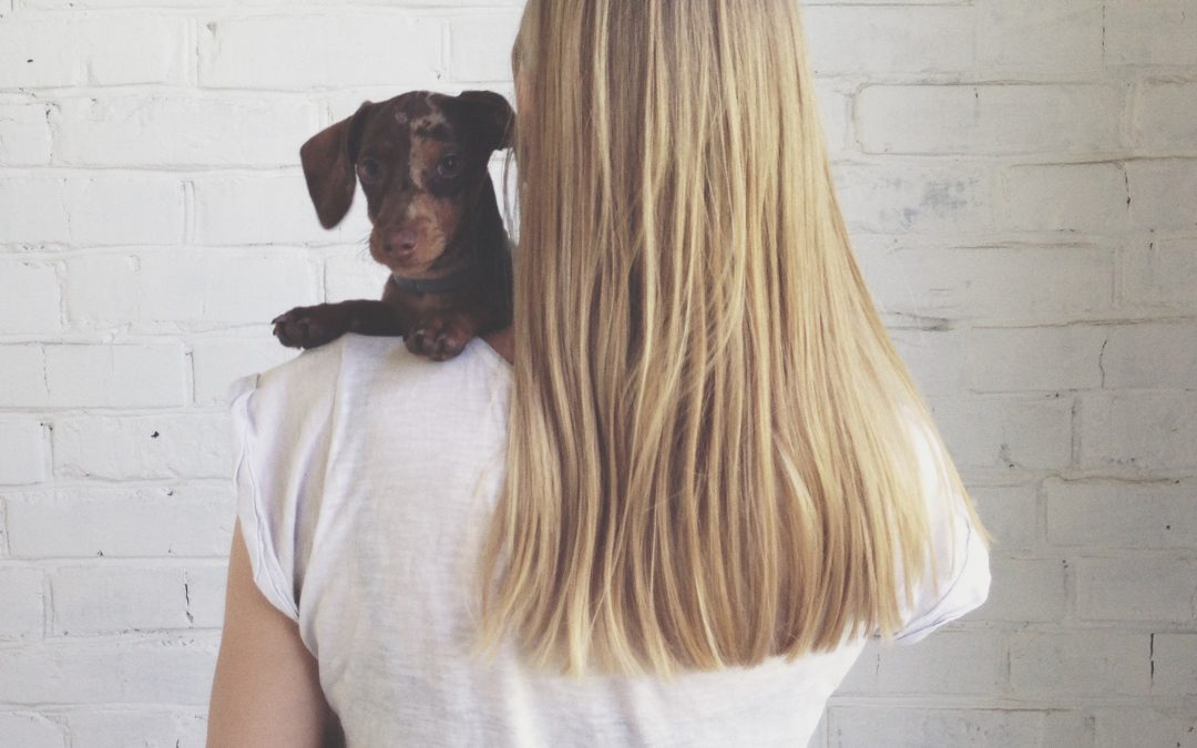 ¿Un perro puede ser víctima de violencia machista?