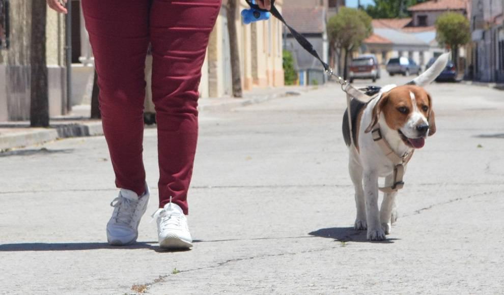 Casas de acogida en Valladolid para los animales de víctimas de violencia de género