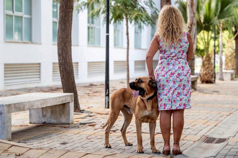 VioPet, casas de acogida para animales de víctimas de violencia machista